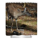 Ms Doe Shower Curtain