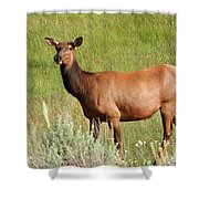 Ms. Elk Shower Curtain