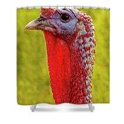 Ms. Turkey Shower Curtain