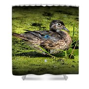 Ms. Wood Duck Shower Curtain