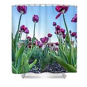 Msu Spring 20 Shower Curtain
