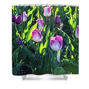 Msu Spring 3 Shower Curtain
