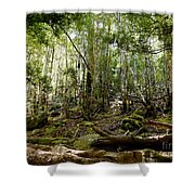Mt Field Forest Shower Curtain
