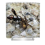 Mud Dauber Wasp And Prey Shower Curtain