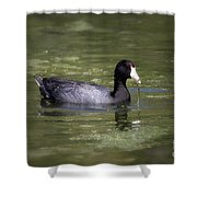 Mud Hen Shower Curtain