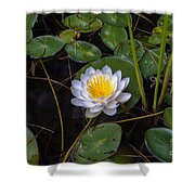 Mudd Pond Water Lily Shower Curtain