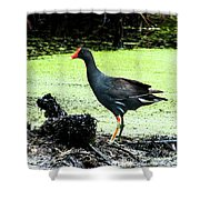Muddy Marsh Shower Curtain