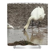 Muddy Tundra Swan Shower Curtain