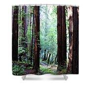 Muir Woods 1 Shower Curtain