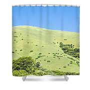 Muir Woods Forest Drive By Nature Near San Francisco Shower Curtain