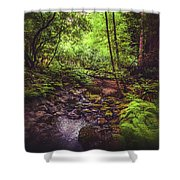 Muir Woods No. 3 Shower Curtain