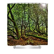 Muir Woods Rejuvenation Shower Curtain