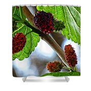 Mulberry Season Shower Curtain