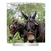Mule Days 2 Shower Curtain