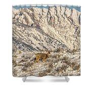 Mule Deer Buck In Winter Sun Shower Curtain