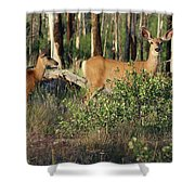 Mule Deer Doe And Fawn Shower Curtain