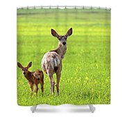 Mule Deer Doe And Fawn Looking Back Over Their Shoulders Shower Curtain