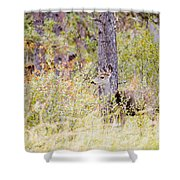 Mule Deer Doe In The Pike National Forest Shower Curtain
