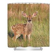 Mule Deer Fawn Is All Ears Shower Curtain