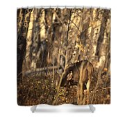 Mule Deer In Aspen Thicket Shower Curtain