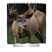Mule Deer In Velvet 03 Shower Curtain