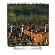 Mule Deer In Velvet 04 Shower Curtain