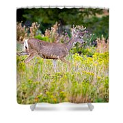 Mule Deer Shower Curtain