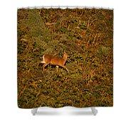 Mule Deer - Mattole Beach Shower Curtain
