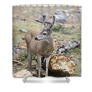 Mule Deer Odocoileus Hemionus Buck Shower Curtain