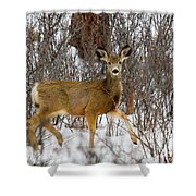 Mule Deer Portrait In Heavy Snow Shower Curtain