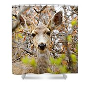 Mule Deer Portrait In The Pike National Forest Shower Curtain