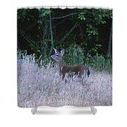 Mule Deer - Sinkyone Wilderness Shower Curtain
