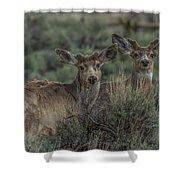Mule Deer Visitors At Sunset Shower Curtain