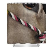 Mule Eye Shower Curtain