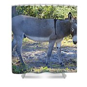 Mule In The Pasture Shower Curtain