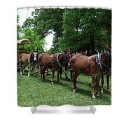 Mule Team Shower Curtain
