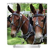 Mules 6 Shower Curtain