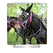 Mules 7 Shower Curtain