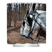Mules At Sugar Camp Shower Curtain