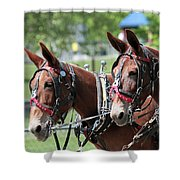 Mules Day 2016 Shower Curtain