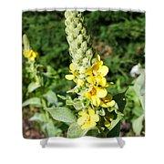Mullein Wildflower Shower Curtain