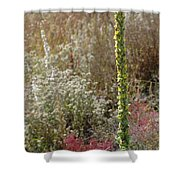 Mullin And Other Springtime Wildflowers Shower Curtain