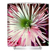 Multi Color Aster Shower Curtain