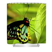 Multi Colored Buttrfly Shower Curtain