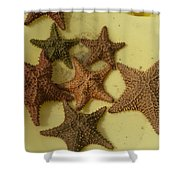 Multi-colored Star Fish On The Sand Shower Curtain