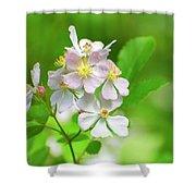 Multiflora Rose Shower Curtain