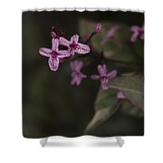 Multiples In Bloom Shower Curtain
