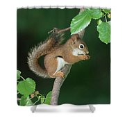 Munching Mulberries Shower Curtain
