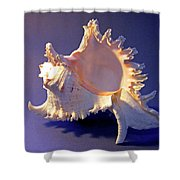 Murex Ramosus Seashell Shower Curtain