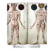 Muscle Man, Brains Ventricles, 15th Shower Curtain
